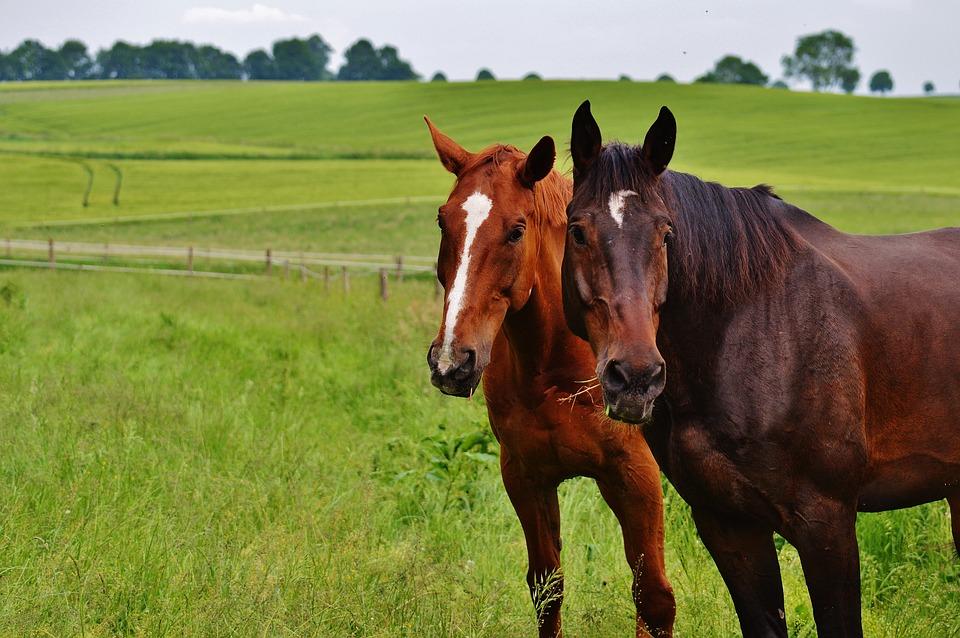 Mit Fütterung von Pferdehanf gesund durch den Sommer